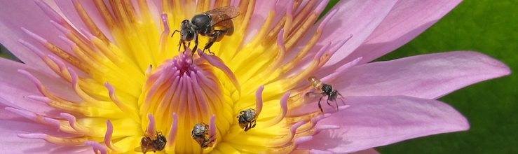 photo of bees on a flower